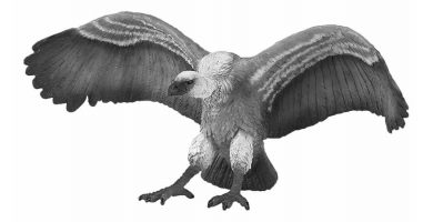 ave de roc gigante